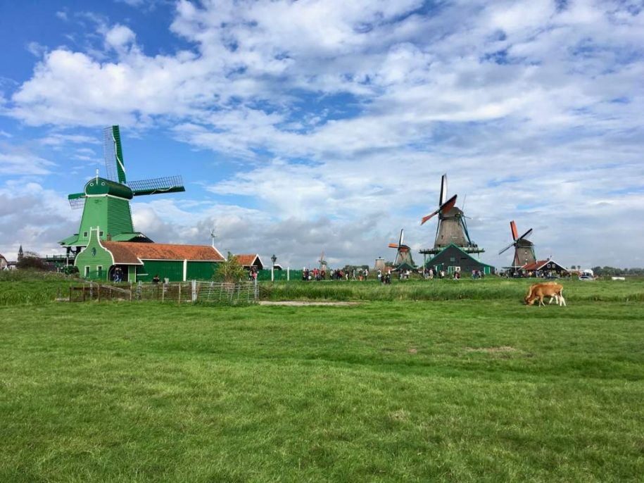 Countryside and windmill tour Amsterdam