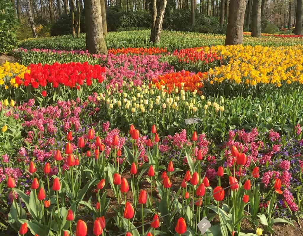 day trip from amsterdam to keukenhof gardens